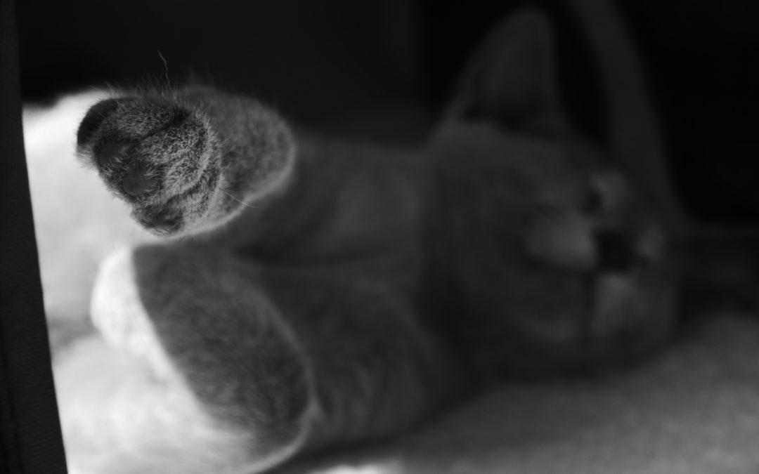 13 lipca 2017 – Ciężkie życie kota…